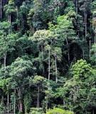 Mấy vấn đề về tài nguyên và môi trường trong tiến trình hội nhập kinh tế quốc tế