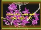 HÌNH THÁI - GIẢI PHẪU  H ỌC THỰC  VẬT - Thân cây