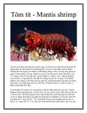 Tôm tít - Mantis shrimp