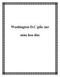 Washington D.C giấc mơ màu hoa đào