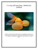 Cá vàng mắt bong bóng - Bubble Eye Goldfish