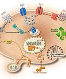 Sinh học Tế bào