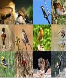 Hiện trạng và suy thoái đa dạng sinh học ở Việt Nam - PGS.TS Lê Cảnh