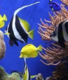 Các bệnh thường gặp ở cá biển