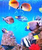 Cách nuôi cá cảnh biển