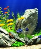Cách thay nước bể cá cảnh