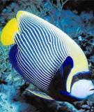 Nuôi cá cảnh biển: Thú chơi công phu và có cơ hội phát triển