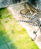 Kỹ thuật nuôi Cá Sấu - Cuộc di cư định mệnh