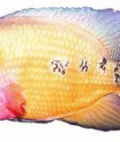 Nguồn gốc cá La Hán