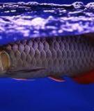 Các câu hỏi xoay quanh cá rồng