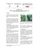 Hướng dẫn ghép cà chua để trồng trong vụ nóng ẩm