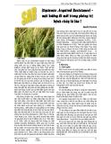 (Systemic Acquired Resistance(Resistance) – một hướng đi mới trong phòng trị bệnh cháy lá lúa ?