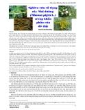 Nghiên cứu sử dụng cây Mai dương (Mimosa pigra L.) trong khẩu phần của dê thịt