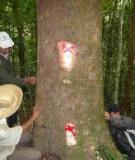 Sản lượng rừng