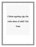 Chiêm ngưỡng cặp rắn cuốn nhau cổ nhất Việt Nam