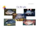 tài liệu tập huấn nuôi cá rô phi