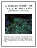 Sự đa dạng của quần thể vi sinh vật trong ruột của cá bơn ô liu (Paralichthys olivaceus)