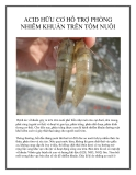 Acid hữu cơ hỗ trợ phòng nhiễm khuẩn trên tôm nuôi