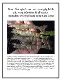 Nghiên cứu được thực hiện nhằm bước đầu tìm hiểu về vi-rút gây bệnh đầu vàng ở vùng Đồng Bằng Sông Cửu Long