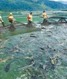 Công nghệ nuôi cá hồ chứa