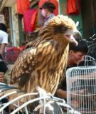 Chợ Hàng- chợ quê truyền thống