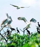 Khám phá du lịch sinh thái nổi tiếng ở Bạc Liêu