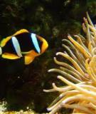 Đặc điểm sinh học một số loài cá cảnh biển