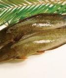 Kĩ thuật nuôi cá trê