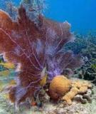 Các chu trình chuyển hóa vật chất trong đại dương