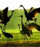 Thăm các vườn chim Nam Bộ