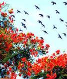 Đề tài nghiên cứu khoa học: Tìm hiểu về lễ hội du lịch, nghiên cứu điển hình lễ hội Hoa phượng đỏ Hải Phòng