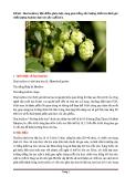 Đề tài: Hoa houblon ( đặc điểm, phân loại, vùng gieo trồng, sản lượng, kiểm tra đánh giá chất lượng houblon đưa vào sản xuất bia )