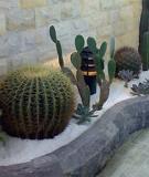 Vườn xương rồng trên chung cư