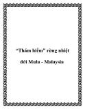 """""""Thám hiểm"""" rừng nhiệt đới Mulu - Malaysia"""
