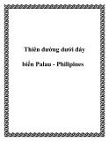 Thiên đường dưới đáy biển Palau - Philipines