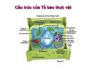Cấu trúc Tế bào thực vật