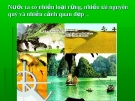 Rừng Việt Nam