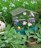 Dùng chuồng chim để...trang trí sân vườn