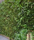 Vườn cây xanh trên tường nhà