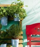 Vườn rau mini đẹp và tiện dụng