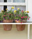 Vườn hoa cực xinh bên cửa sổ
