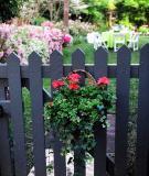 """Ấn tượng với """"xe hoa"""" vintage cho khu vườn nhà bạn"""