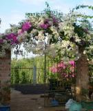 Tạo điểm nhấn rực rỡ cho ngôi nhà của bạn bằng hoa leo