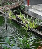 Các loại cây cho vườn thủy sinh