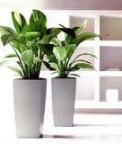 Bài trí cây xanh trong nhà