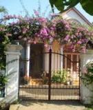 Làm đẹp cổng bởi giàn hoa giấy