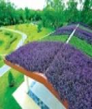 Thiết kế những khu vườn trên mái