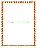 Những bài thuốc từ cỏ dùi trống
