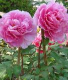 Công dụng kỳ diệu của loài hoa