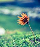 Giả vờ tha thứ là cách trả thù đau đớn nhất